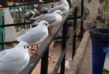 Bird / Birds in YunNan, China