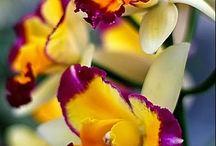 το αγαπημένο μου λουλουδι
