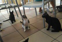 zakyntos cats