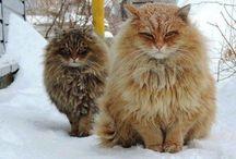 Kotełe