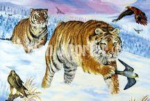 Big cats / The Oil paintings from the English artist Alan John Porter. #alanjporterart #kompas #art #tigers #painting #bigcats #cheetah #jaguars #leopards