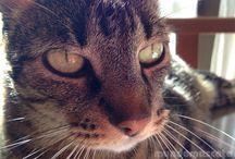 Miradas Felinas / ¿Tu gato tiene una mirada que embruja? Si es así publica una foto en este tablero.