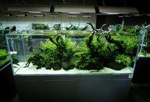 Aquarium Freshwater