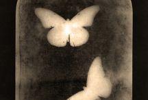 motýli,hmyz a jiná havěť