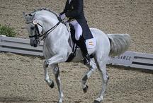Horses / Hester