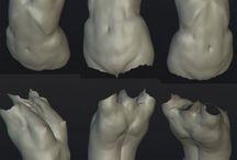 anatomy_body