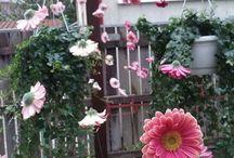 Ghirlande cu flori