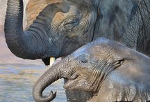 Extraordinary Elephants / by Shannon Sims