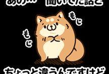 ボンレス犬♪♪♪