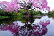 árvore e Jardim