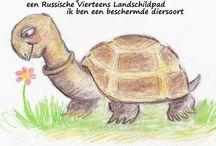 Boris boekje / Het leven van Boris de schildpad. Door Pieternel