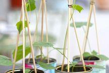 Plant stuff