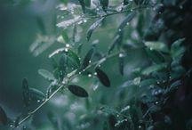 rain, rain, please just stay