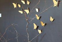 motyle papillons