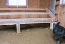 Hühner Stall