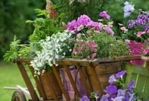 For Garden Lovers