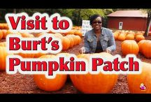 Pumpkin videos Halloween Alternatives