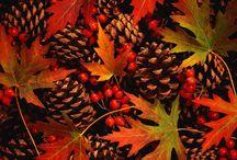 Fall wedding / Autumnal wedding