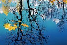 pictures of wonder / by Deann Breslavets