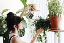Dream Houseplant Collections / House plant collections and unusual indoor plants.