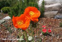 What's in my flower garden?