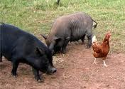 Farm Animals  / by Tammy Stinson