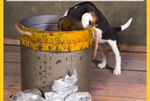 Puppy Tips / Puppies are not dogs. Get some great tips for raising your new puppy here!