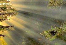 foto natuur