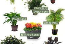 Ilmanpuhdistaja-kasvit
