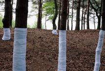 Forest Artist / ©Zander Olsen