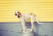 got.dogs / by Katie Weidenboerner