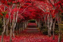 Tree Tunnels / Trees are our air.....appreciate them...