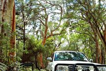 Day trips from Rainbow Beach