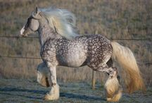 Horses / by Brenna Ceallaigh