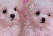 Puppies! / Cuteness Overload!!