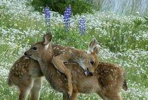 Deer / by Sydney Vegezzi