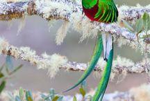 Birds / by Sharon Bippus