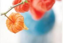 Flora / by Susan McDaniel Photo Styling