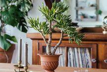 Home plants / Des inspirations pour décorer sa maison ou son appartement avec des plantes d'intérieur. Cactus, fleurs, plantes vertes.