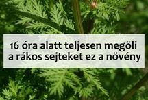 gyógyitó növények és hatásai