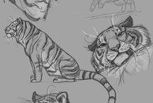 feline anatomy refs