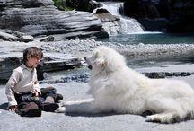 BELLE E SEBASTIEN / Cosa succede tra un bambino e un cane impaurito? Nasce una grande amicizia...