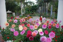 Pragati Resorts - Plants and Flowers / Plants and Flowers at Pragati Resorts