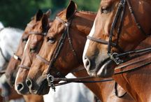 Tips on How to Administer Horse Medicine / Learn more about Ablers easy to use equine medicine / by Abler Equine Pharmaceutical