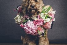 kutya & virág