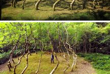 The Human Mark in Nature / Art in Nature by the use of the human mark