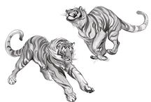 How to draw cats and big cats!