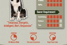 Info of Border collies