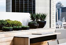 Outdoor feature plants