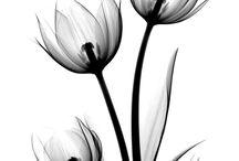 Черно белые цветы